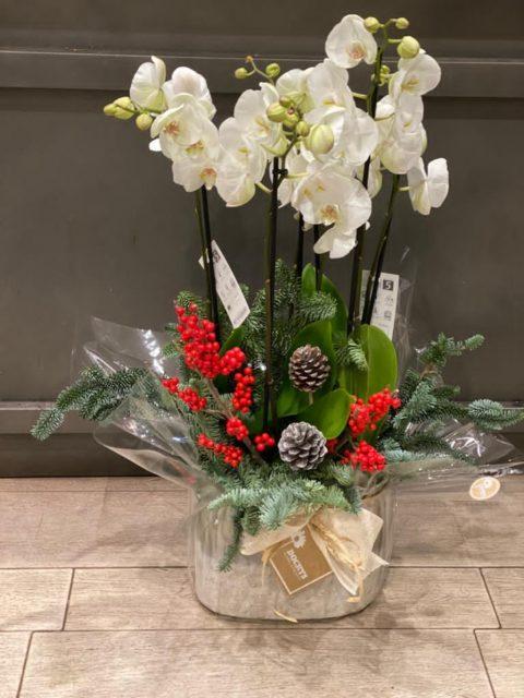Orquídea Círculo Polar de Docrys Floral Concepts